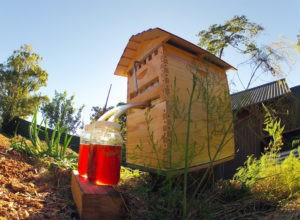 Нов прием на проекти за пчеларите