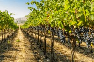 Лозаро-винарската програма тръгва в края на януари