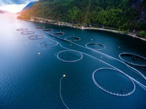 """Приемът по """"Иновации в аквакултурата"""" е отворен"""