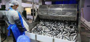 Стартира прием на проекти за преработка на продукти от риболов и аквакултури